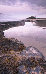 Reflecting Bamburgh (pixellesley) Tags: bamburgh castle stronghold northumberland iconic rocks water reflections seaweed sand beach coastline colour sunset sundown stormclouds evening lesleygooding landscape