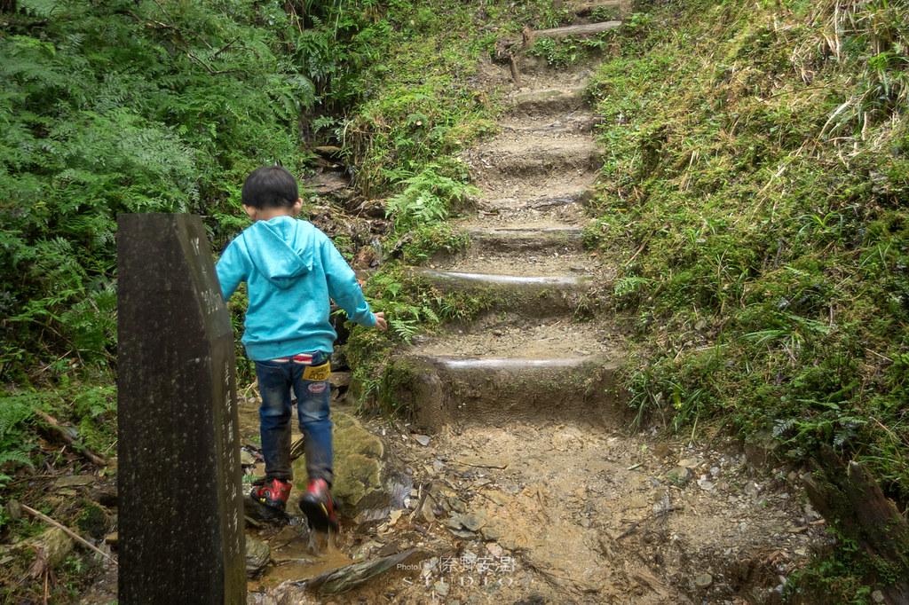 太平山翠峰湖環山步道 |走在泥濘的道路上,只為途中美景 | 宜蘭大同鄉61