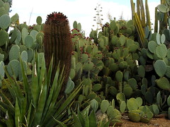 Cactus Country, Strathmerton 1429 (Lesley A Butler) Tags: victoria strathmerton cactuscountry cacti australia
