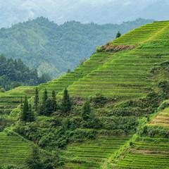 DSC08521-Edit (nigel0577) Tags: sony alpha a99ii china longsheng longjijinkeng damaojie rice terrace guilin minolta hsm 80200