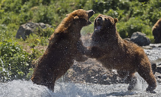 Fight in the river