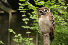 IMG_4505 (gabrielgs) Tags: holiday holiday2018 vakantie2018 camping frankrijk france zoo la fleche lafleche animals dierentuin loire