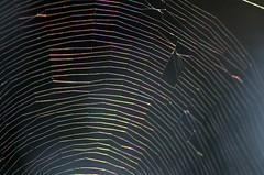 Rainbow Web (Doolallyally) Tags: rainbow web spiderweb light devon england