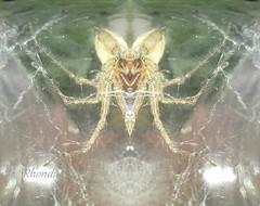 BatSpider ? (rhonda_lansky) Tags: nature mask face mirrorface creepy scary surreal hauntedfaces halloween lansky rhondalansky michigan spider bat writing poem poetry story shortstories scaryholiday naturesface mirror mirrored flip flipped symmetrical artistic art aurorarose1st aurorarose1start