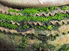 Old vs green. (natureflower) Tags: old green moss lichens small pot earthenware pottery crockery