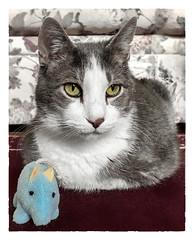 Trophy (Timothy Valentine) Tags: 0918 quinnomannion happycaturday toy home cat 2018 eastbridgewater massachusetts unitedstates us