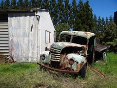 Out to pasture (Home Land & Sea) Tags: nz newzealand taranaki rusty old truck sooc sonycybershot dschx100v pointshoot homelandsea