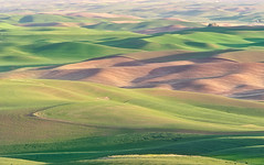 SteptoeButteView2 (fieldsajay) Tags: palouse steptoe butte landscape
