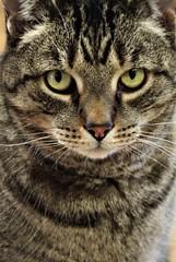 Sweet Face.. (catherine4077) Tags: cat feline pigsanimalsanctuary shepherdstown westvirginia