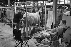 Cattle Barn (mfhiatt) Tags: dscf19360818djpg cattle barn iowa iowastatefair desmoines blackandwhite fujix100f streetphotography street