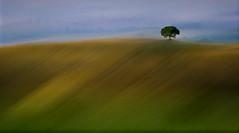 Unico (Zz manipulation) Tags: art ambrosioni zzmanipulation landscape albero natura colline pisane verde erba campi cielo