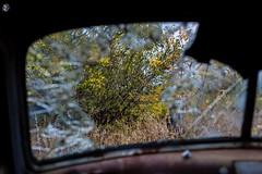 Looking through the glass (Sask Explorer) Tags: saskexplorer saskruralexploration saskatchewan exploresask exploration chevrolet broken glass