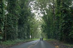 Tree Tunnel (xythian) Tags: hi kauai