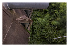 Lust for life (Markus Lehr) Tags: concrete architecture nature passivevsactive foliage availablelight dusk longexposure langzeitbelichtung atmosphere urbanspace urbandevelopment manmadelandscape contemporaryphotography berlin germany markuslehr