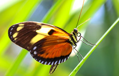 Ray of Light (dianne_stankiewicz) Tags: butterfly nature wildlife insect rayoflight light ray