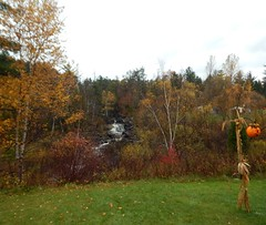 DSCN5227 (mestes76) Tags: 102117 duluth minnesota zoos lakesuperiorzoo halloween booatthezoo trees autumn fall leaves creeks kingsburycreek