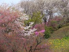 a (10) (hiromi89) Tags: japan beauty beautiful scenery flower wood pond