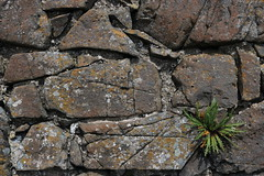 "The wall • <a style=""font-size:0.8em;"" href=""http://www.flickr.com/photos/136447376@N03/44108127641/"" target=""_blank"">View on Flickr</a>"