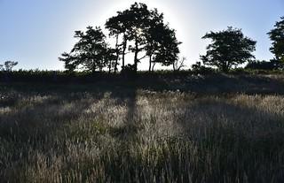 Morgens auf der Weide; Bergenhusen, Stapelholm (2)
