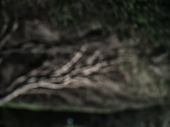 abstract tree (FloBue) Tags: 2018 baum tree albero fotografiaastratta abstractfotografy abstraktephotografie nacht night notturno olympus sardegna sardinia sardinien
