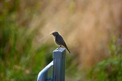 Franck-Barske-0622.jpg (franck_barske) Tags: oiseau concepts puydedôme nature voyages vacances animal
