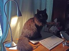 Happy Caturday! (Caulker) Tags: cat vaska myhelper desk lamp computer keyboard mirrow