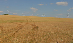 East Cambridgeshire (Adam Swaine) Tags: landscapes landscape england english englishlandscapes counties countryside county fields wheatfields britain british turbines canon rural beautiful seasons farming cambs cambridgeshire