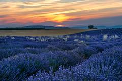 Setting sun (marypink) Tags: plateaudevalensole provenza provence francia france lavanda lavander sky sunset tramonto field fioritura estate summer nikond800 nikkor1635mmf40