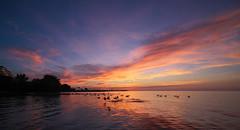 Bronte Beach Dawn (Gavin Edmondstone) Tags: dawn brontebeach oakville ontario laowa75mm ultrawideangle