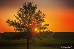 TGIF! Happy Friday Everyone!! (Edale614) Tags: sunset sunsetsaroundtheworld dusk trees sunshine life columbus ohio ohiophoto exploreohio earl614 naturephotography naturelovers nature photography photo photooftheday picoftheday pic wanderlust aroundtheworld sky cbus nikon