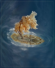 2018 09 04 Apfelbaum Johannisberg IR 720nm - 04 e (Mister-Mastro) Tags: ir infrared 720nm tree island baum insel