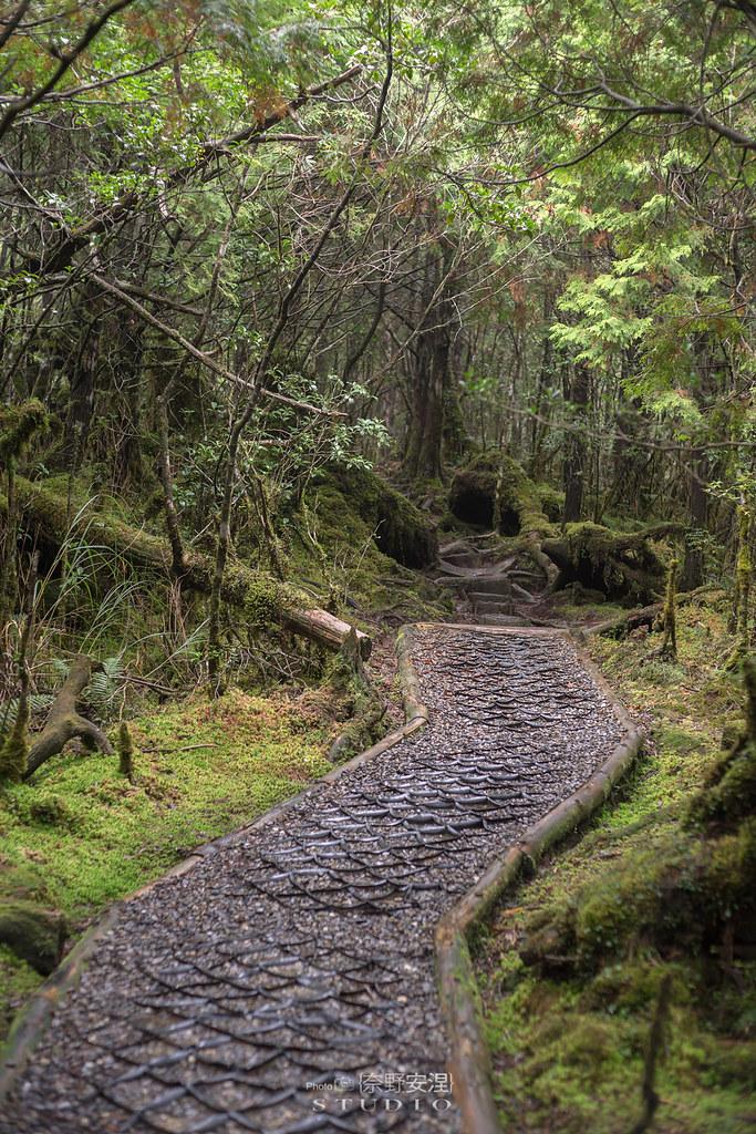 太平山翠峰湖環山步道 |走在泥濘的道路上,只為途中美景 | 宜蘭大同鄉44