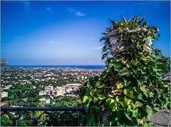 Carini con il suo belvedere (FedericoPatti) Tags: paesaggio sicilia sicily sizilien 2018 mare cielo sea sky verde pianta ringhiera belvedere case orizzonte azzurro sereno huawei20pro