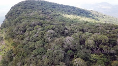 Mount Lico - Drone image of forest unfolding on plateau of Mt Lico