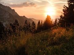 La Gruyère - Jaun / Ref.02356 (FRIBOURG REGION) Tags: suisse switzerland schweiz fribourgregion fribourgrégion lagruyère jaun grandtourdesvanils été sommer summer préalpes voralpen prealps alpes alpen alps montagne mountains sunset sonnenuntergang coucherdusoleil berge sky himmel ciel paysage landschaft landscape