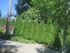 IMG_8358 (Andy E. Nystrom) Tags: bellevue washington wa bellevuewashington