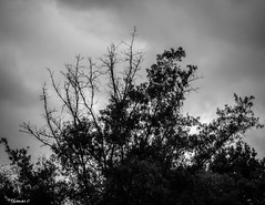 Maybe I Never Knew You (that_damn_duck) Tags: nikon nature blackwhite monochrome clouds cloud bw blackandwhite