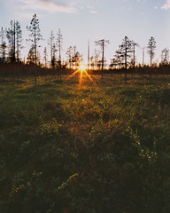 Mitternachtssonne (zanettifoto) Tags: finnland sodankylä rykimäkero tetenalcolortece6 baum luosto sonnenuntergang wolkenhimmel abendsonne fujichromeprovia100f sommer wald gegenlicht moor fin