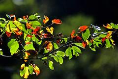 Lumière d'automne (Diegojack) Tags: vaud suisse cossonay echandens d500 nikon nikonpassion lumières saison automne feuilles etang sépey