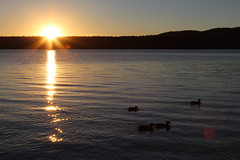 The sun and ducks at Paulina Lake (daveynin) Tags: lake caldera newberry nps oregon sunset dawn duck silhouette