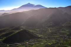 Early morning (Rico the noob) Tags: 2018 d850 landscape nature mountains city outdoor hills 2470mmf28 trees urban tree published forest dof tenerife sky fog teneriffa 2470mm urbanexploration mountain