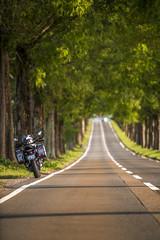 _DSC9975 (MIHARANNRANN) Tags: 琵琶湖 滋賀 メタセコイア並木 バイク