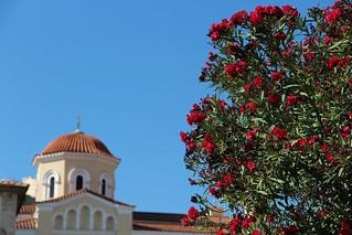 Red Oleander