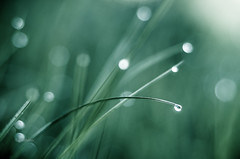 Tau (Hans Eig) Tags: gruen gras tropfen tau licht bokeh