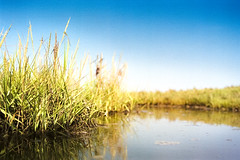 green spot (flyerkat_L.E.) Tags: green water sea salt plant nature film analog fujisuperia200 nikon f80 35mm