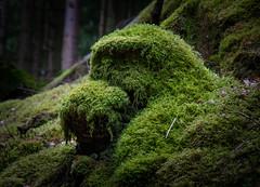 Mossy Monster ! (DP the snapper) Tags: monster moss hafod treestump