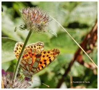 Flower & butterfly.