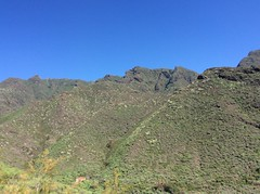 IMG_1667 (rugby#9) Tags: plants mountains trees bluesky outdoor tenerife canaryislands canaries tree mountainside