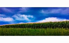 Champs de maïs (freddylyon69) Tags: creative creation saconay contraste nature fields champs maïs nuages ciel clouds sky ipad