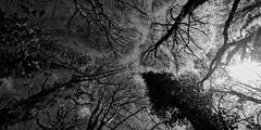 IMG_1358 (Amanda Hinault - 風流韻事) Tags: paysage landscape nature nb noirblanc blackwhite bw monochrome darktable ccbysa photobyamandahinault creativecommons pentaxart